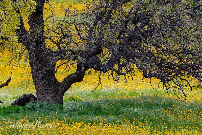 Oak Tree trunk with wildflowers