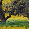 Oak Tree trunk with wildflowers