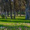 Wildflowers in green field