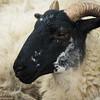 Dirty Ram