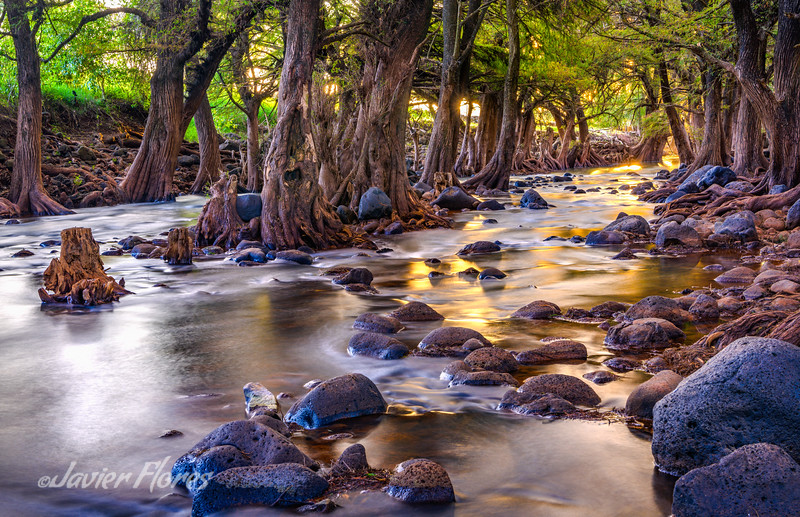 Los Sabinos River Glowing with Golden Light