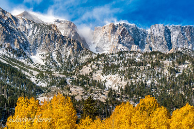 Fall color with snow cover mountains
