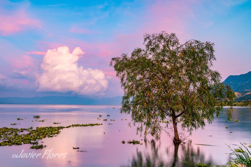Single Tree at Lake Chapala