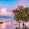 Single Tree at Lake Chapala