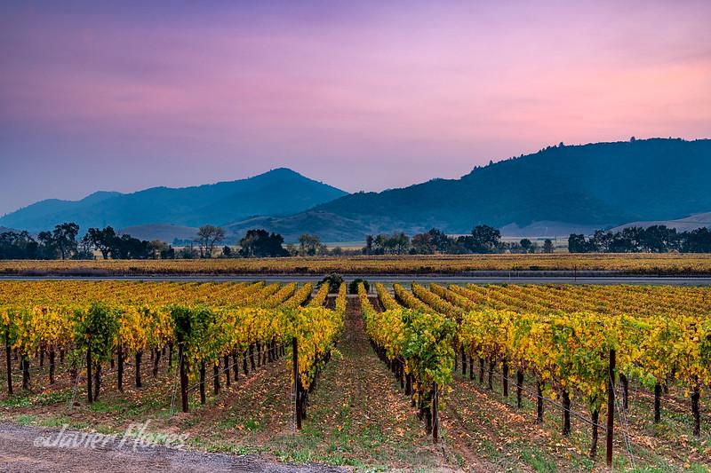 Napa Valley Fall Colors