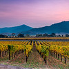 Napa Valley Fall Colors