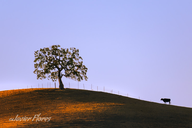 Hilltop Silhouettes