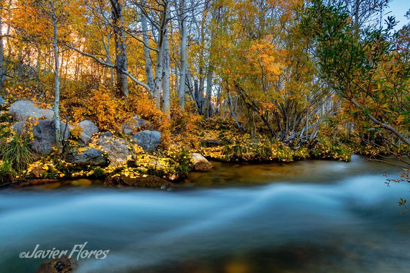 Rushing Water at Bishop Creek