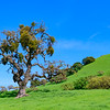 California Rolling Hills