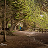 Walk Among the trees