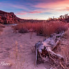Driftwood on the Colorado Rivers shore at sunset