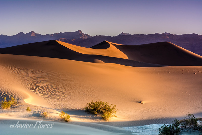Dunes at Sunrise