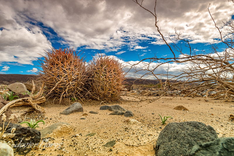 Panamint Valley desert plants with dramatic sky