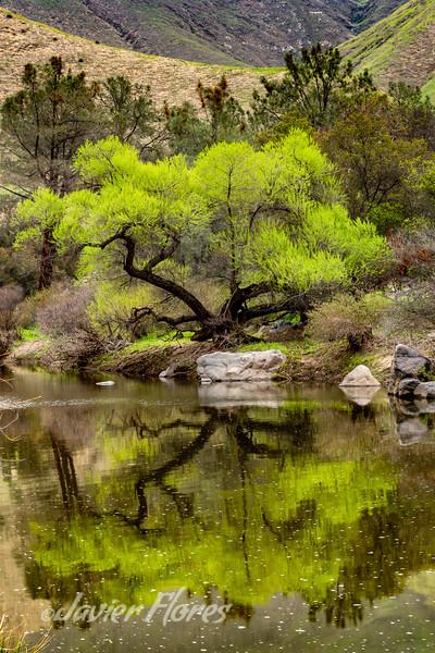 Kern River Tree Reflections