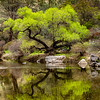 Kern River Tree Reflections