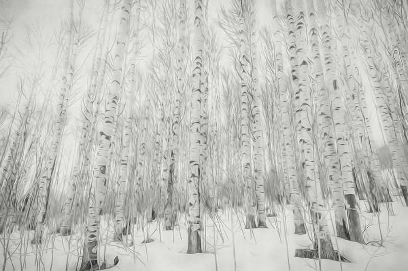Winter Aspens - Painting #3