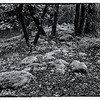 Uvas Park Moss Covered Rocks