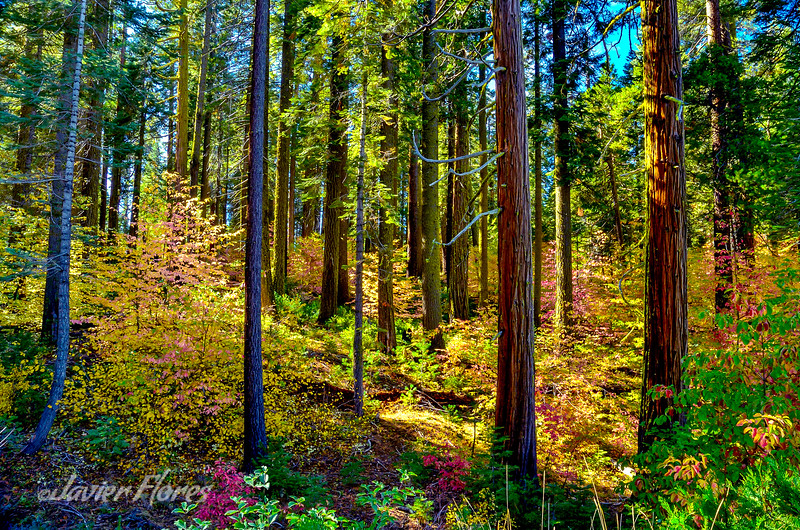 Fall Colors at Yosemite