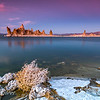 Tumble Weed at Mono Lake