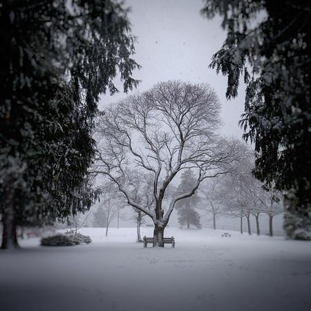 Alone at Lakeside park