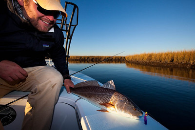 Redfish in the marsh.
