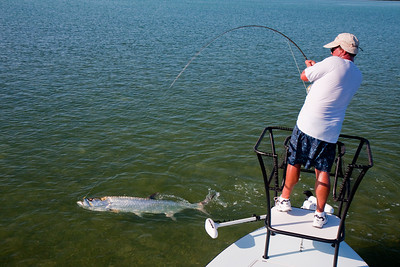 Piscator has this fish to the point where it can be handled.  In addition to removing the hook, we also take the opportunity to extract a little DNA for the State of Florida's Tarpon Genetics program: http://myfwc.com/newsroom/10/southwest/News_10_SW_TarponDNA.htm