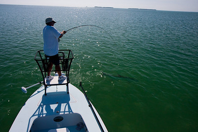 This series of photos shows my friend, Piscator, fighting a nice Tarpon near the boat.  This is after the initial running and jumping, and is well into the fight.