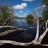 Backcountry mangroves