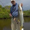 Everglades Snook