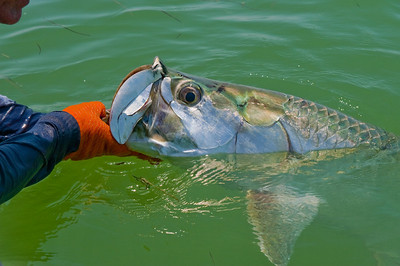 Me and My Tarpon
