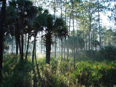 Corkscrew Swamp