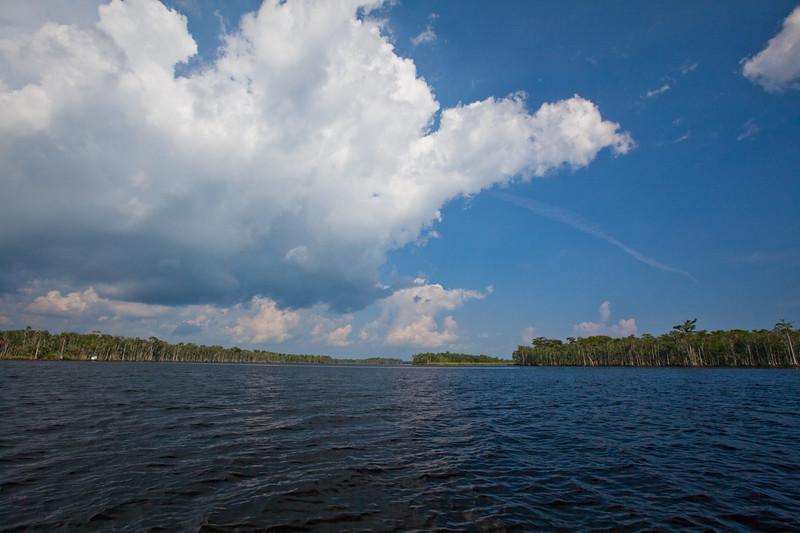 The broad Suwannee River near its delta.