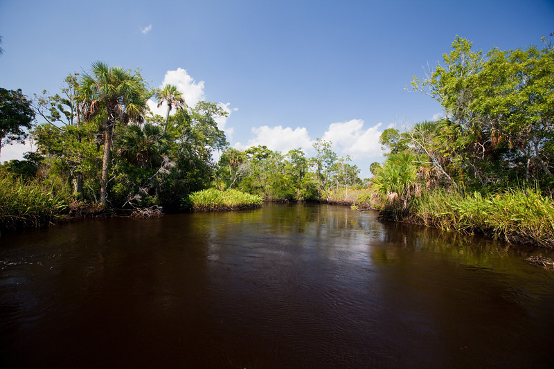Part of the Suwannee River.