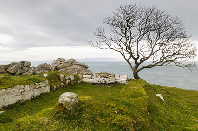 The Murlough Bay's tree