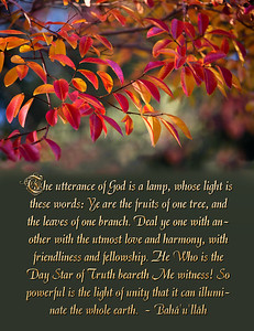 Ye are the fruits of one tree, and the leaves of one branch.
