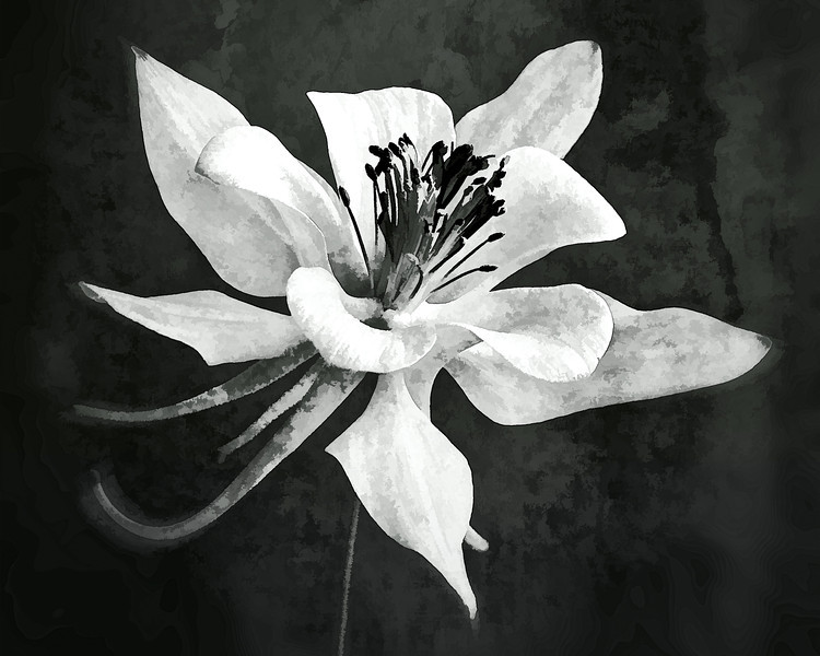 Columbine, Limited Edition Print