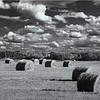 Field of Hay Bales, BC