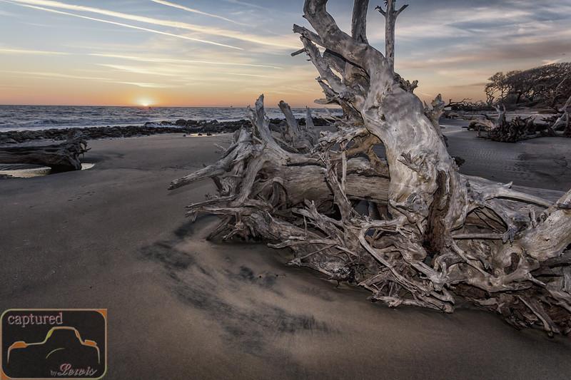 Driftwood Beach 2