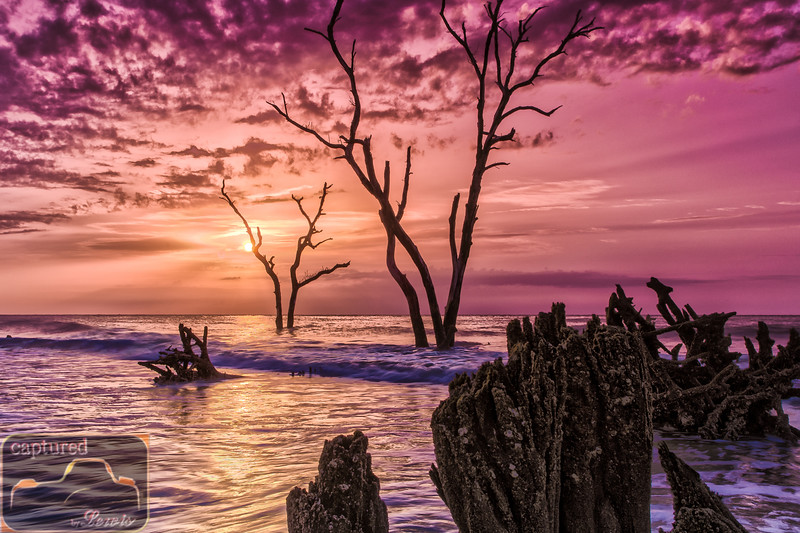 Hunting Island Ghost Trees 1