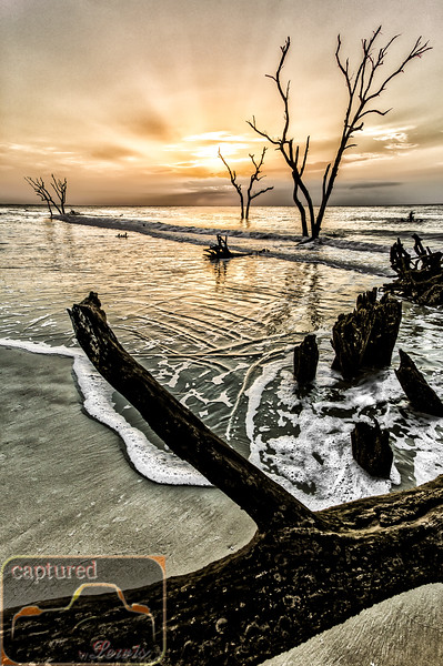 Hunting Island Ghost Trees 4