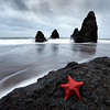 """Rodeo beach""<br /> <br /> Found this starfish here at the last minute. Took one shot and the next wave took it away."