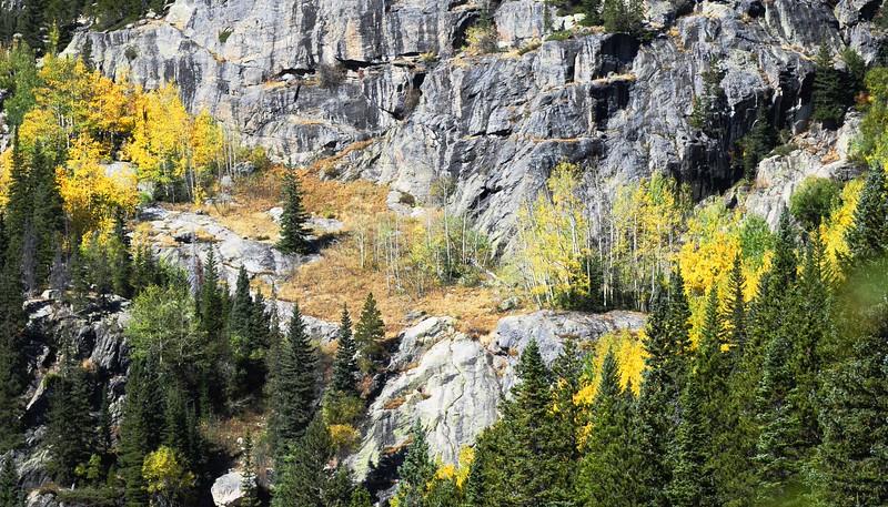Aspens at Bear Lake, RMNP