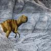 Dinosaur, Kleskun Hills, Alberta