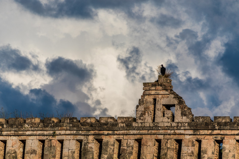 Black Bird on top of Ruins2