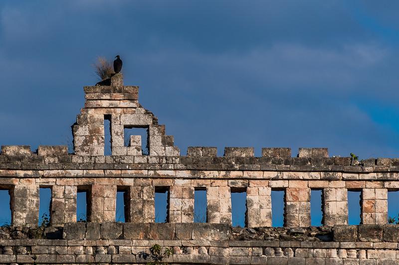 Black Bird on top of Ruins