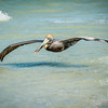 Pelican, Low Level