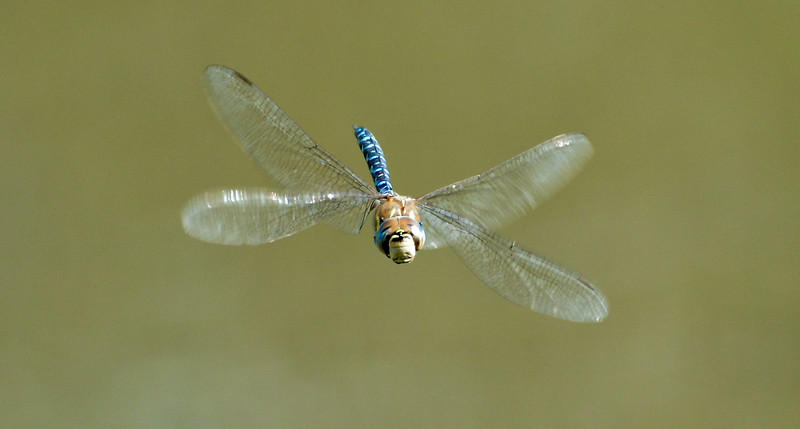 On Dragonfly's Wings
