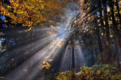A Forest of Light