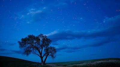 Alone Under the Stars