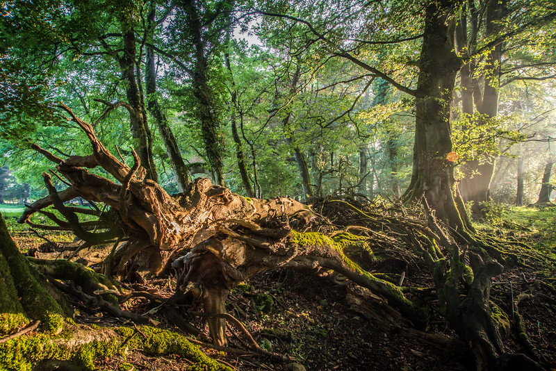 The Witches Wood, Ireland